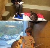 Children read to shelter cats…