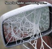 Frozen web…