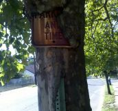 Iron is an important part of a tree's diet…