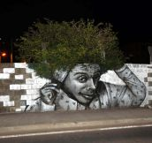 Tree graffiti…