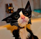 Hilarious Pictures Of Wet Cats (22 pics)