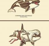 Connor Kenwhale…