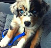 24 Lovable Dog Breeds The World Needs To Know About