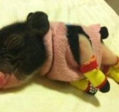 He's nice and warm in his pigjamas.