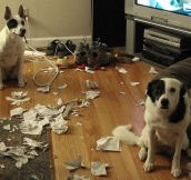 14 Guilty Dogs Caught in the Act – But Still So Cute