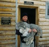 The Paws On This Lynx Are Huge. What A Magnificent Creature.