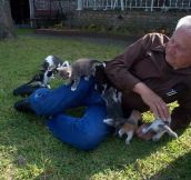 Herd of Kittens Adorably Attacks a Grandpa
