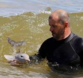What a baby dolphin looks like… :)