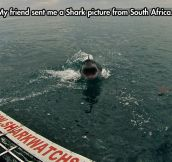 Good to know sharks still can't fly…