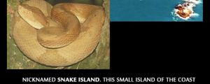 Island Of Nope
