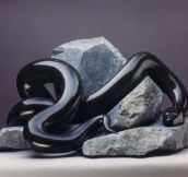 Beautiful Black Snake