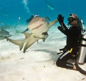 Shark High Finning a Diver