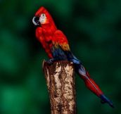 Woman Cleverly Painted To Look Like a Parrot