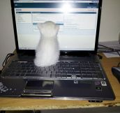 I Was Told There Would Be a Mouse