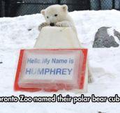 Hello Humphrey!