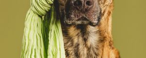 3 Ridiculously Photogenic Dogs