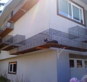 Cat Owner Built an Outdoor Catwalk Around His House