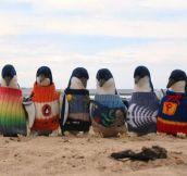 Antarctica's Casual Fridays