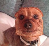 I Think Your Dog May Be Inbred