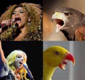 If popstars were birds…