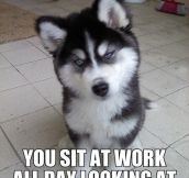 Husky Will Not Tolerate Cheating