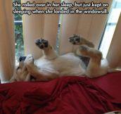 Heavy Sleeping Puppy