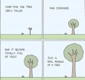 So The Tree Grew And Grew…