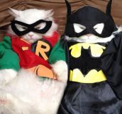 Catman And Purrobin