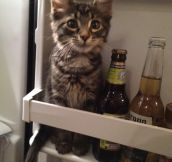 Hmm, What Do I Want Today?. Cat Or Beer?