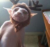 Dobby is free…