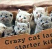 Cat lady starter kit…