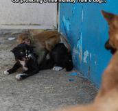 Nobody touch the monkey…