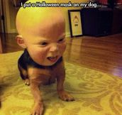 One creepy dog…