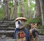 Shiba Inu and cat. Such friend. Much cute.