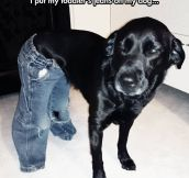 A Dog With Jeans