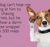 Canine selective hearing…