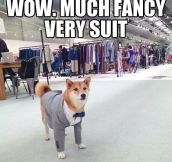 Wow. Much Style. Such Impressive