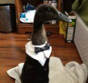 Meet Duck-Xedo