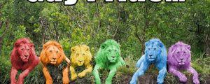 Fear the rainbow…