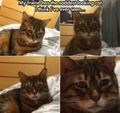 The saddest cat in the world