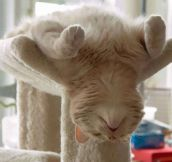 30 Cats Who Have Mastered The Art Of Sleep-Fu