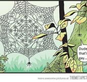 Fabulous Spider Web
