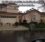 Turkey Infestation