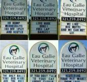 Super creative veterinary ads…