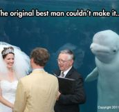 Something old, something new, something borrowed, something Beluga…