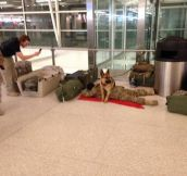 "Military dog ""protecting"" soldier… LOL"