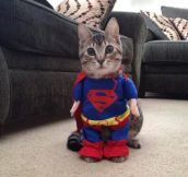 Supercat! Best costume purchase ever…