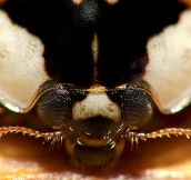 15 Incredible Eye Macros