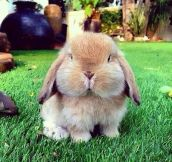 This chubby bunny's name is Cutie Pie. That is all..