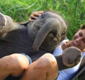 A baby elephant sat on my friend…